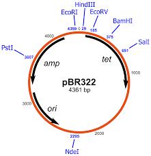 pBR322 - Wikipedia
