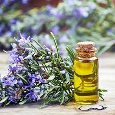 Leaves Natural Rosemary Oil (Rosmarinus Officinalis), For Aroma Incense, Rs  1425 /kg | ID: 9380954073